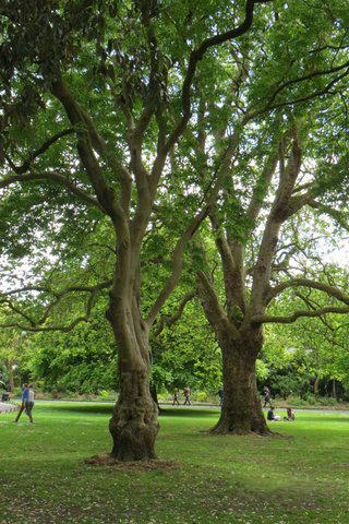 Deux grands arbres majestueux